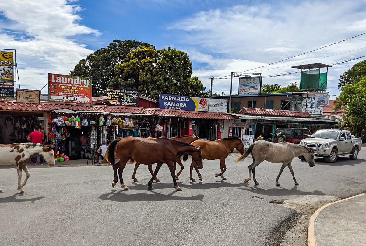 Horses in Samara